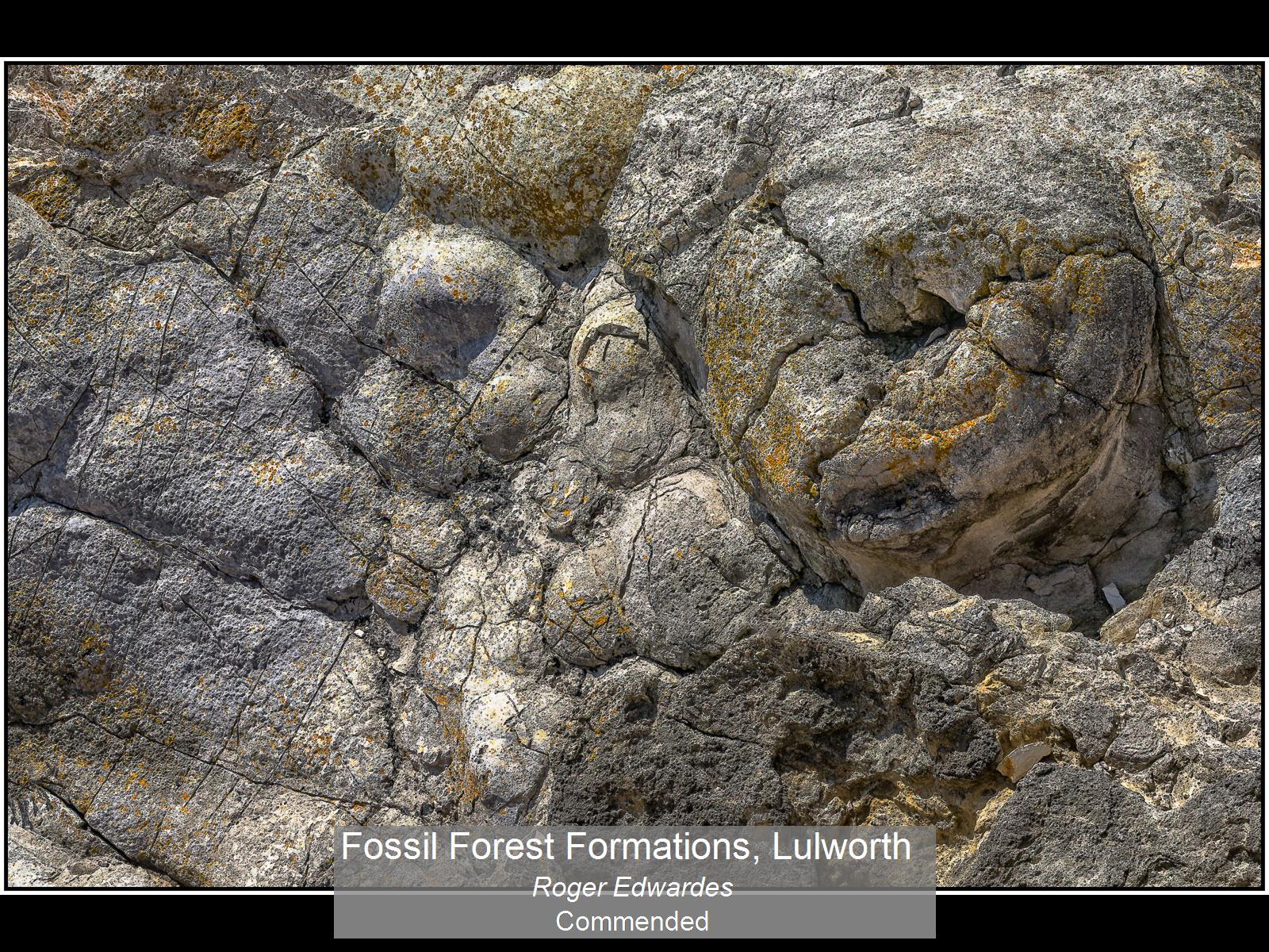 Comm_Fossil Forest Formations, Lulworth_Roger Edwardes
