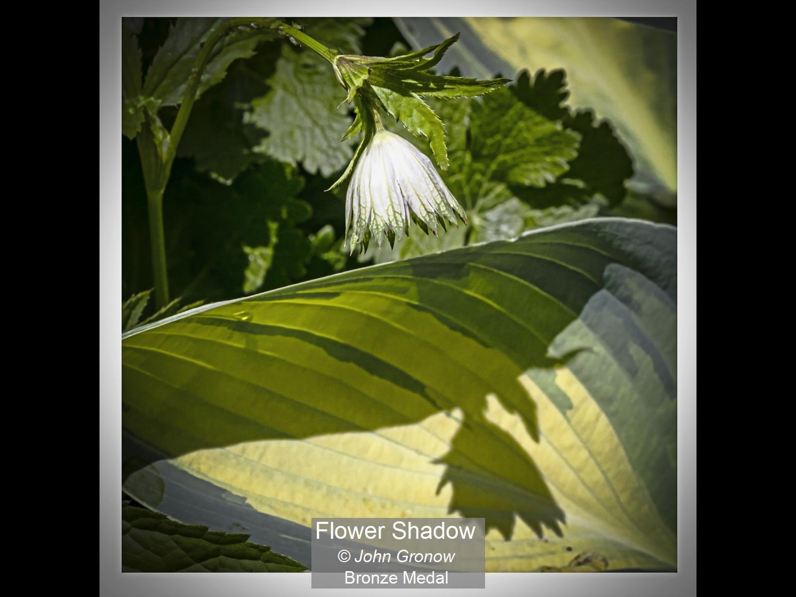 Flower Shadow_John Gronow_Bronze