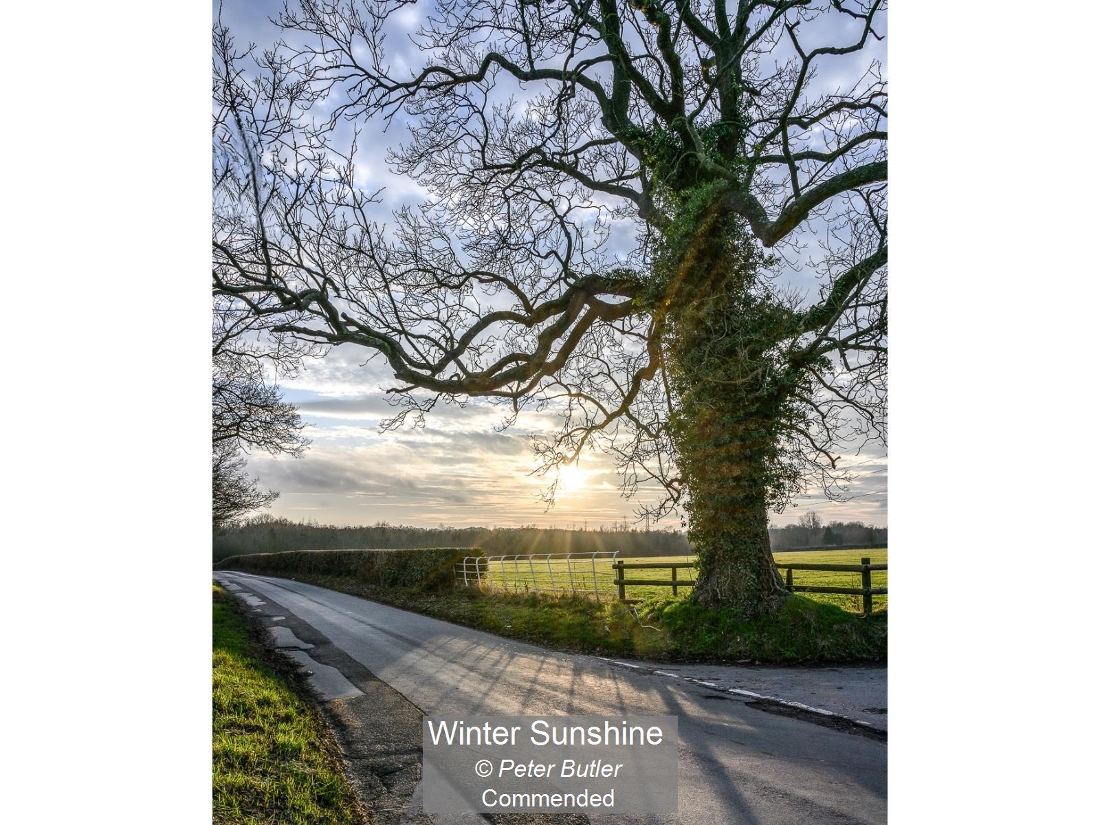 Winter Sunshine_Peter Butler_Comm