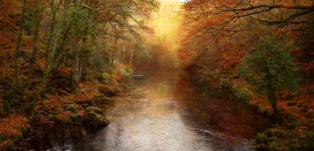 Comm_Jeannine King_Autumn on the River Teign