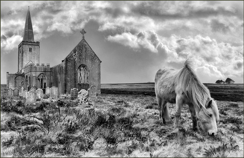 Jeannine King_Horse on the Moors