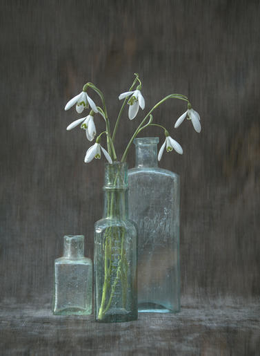 Mike Harris_Snowdrops in a bottle