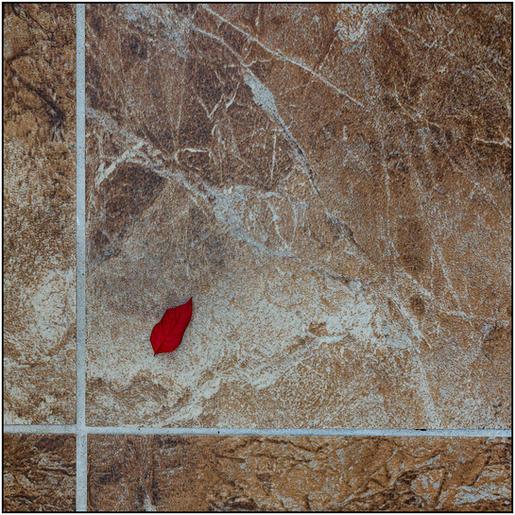 HC Roger Edwardes_Leaf and Tiles