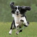 01_Jumping for Joy_Geoff Botwood.jpg