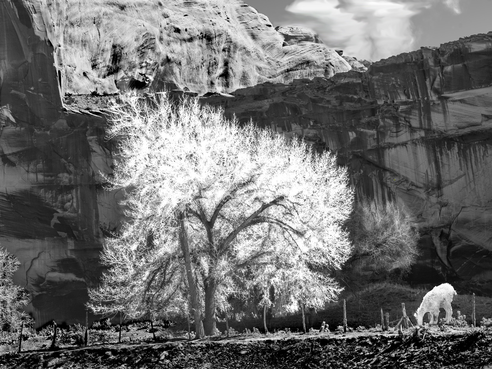 Ron Franklin_Gat in Canyon de Chelly_Non