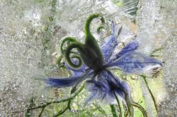5 Frozen Flowers_Jeannine King