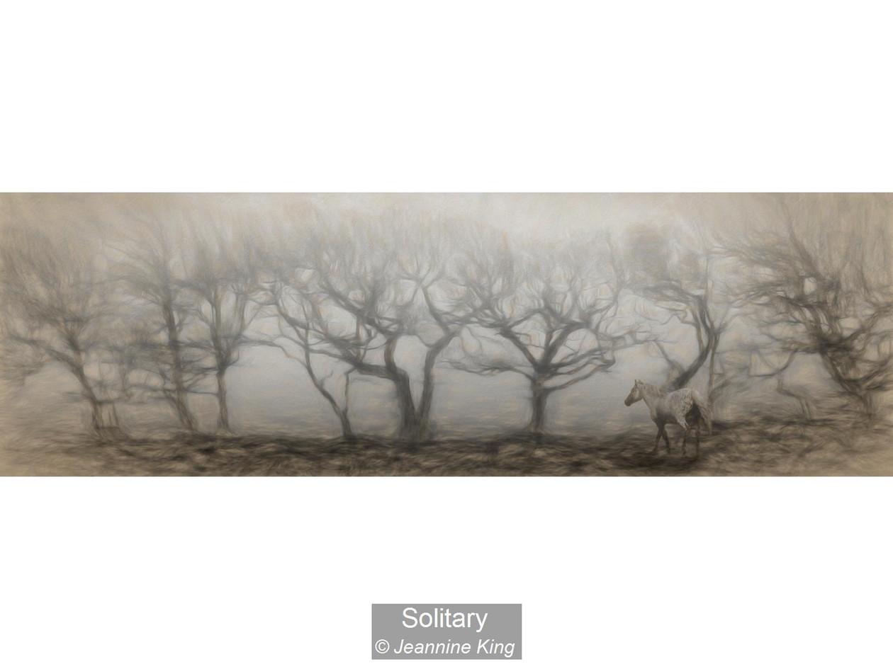 Solitary_Jeannine King.jpg