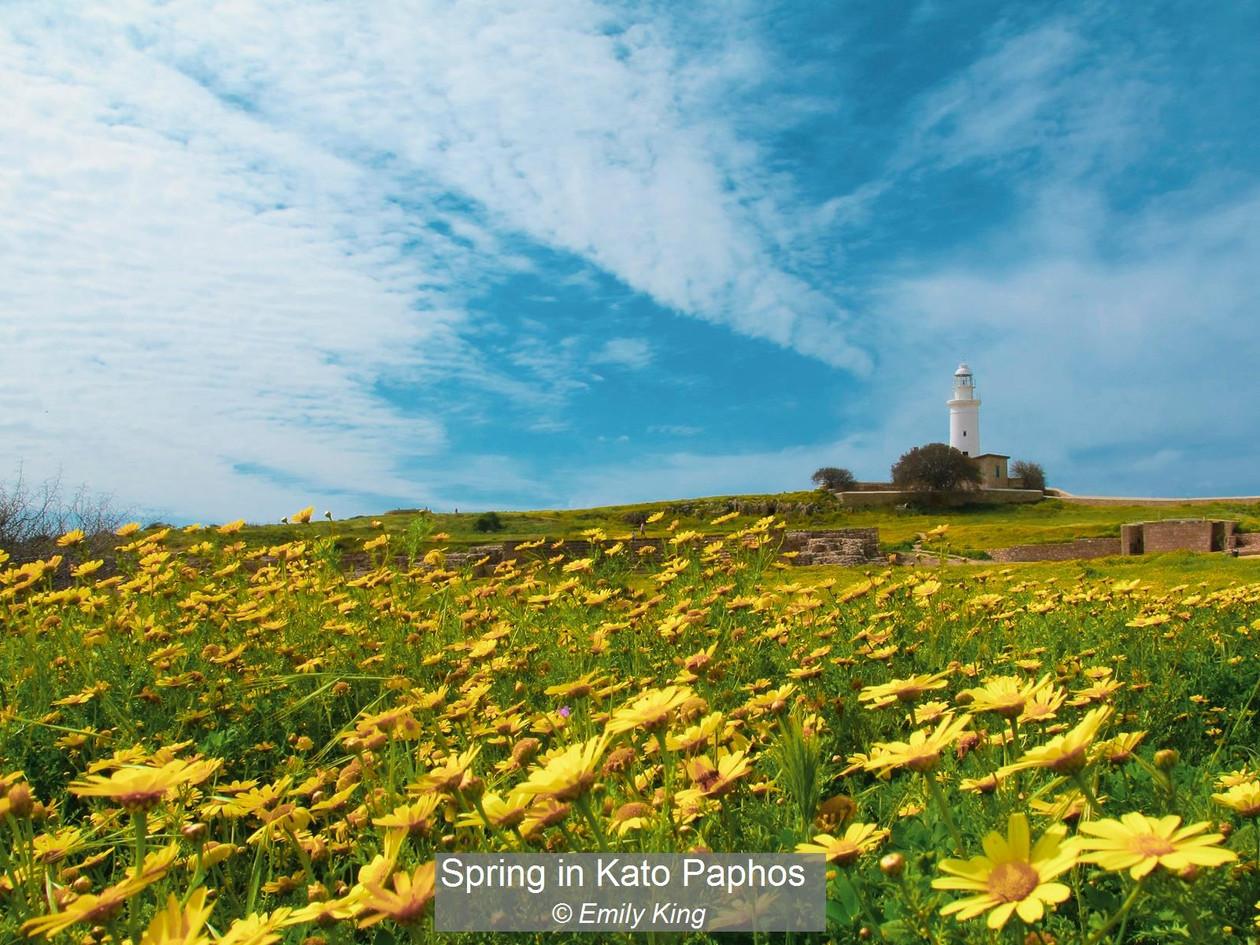 Spring in Kato Paphos_Emily King.jpg