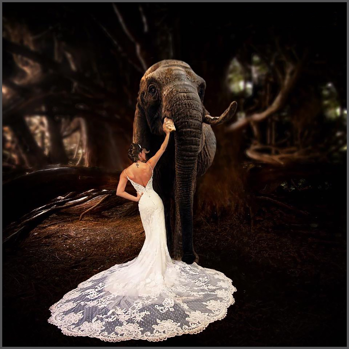 Clive Figes_Jumbo wedding_None