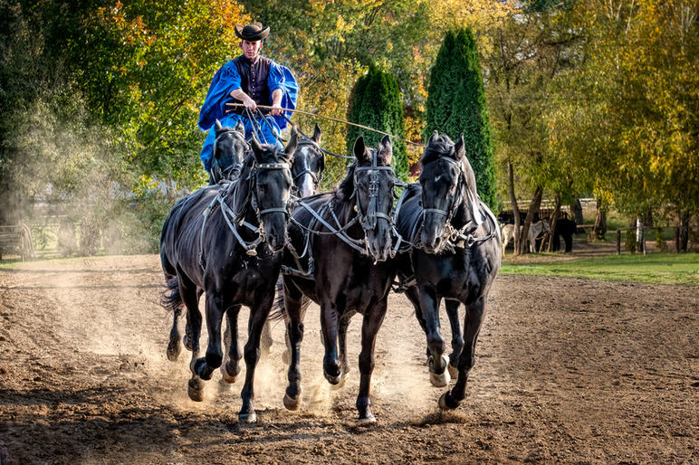 Comm_Peter Bosley_Roman Riding