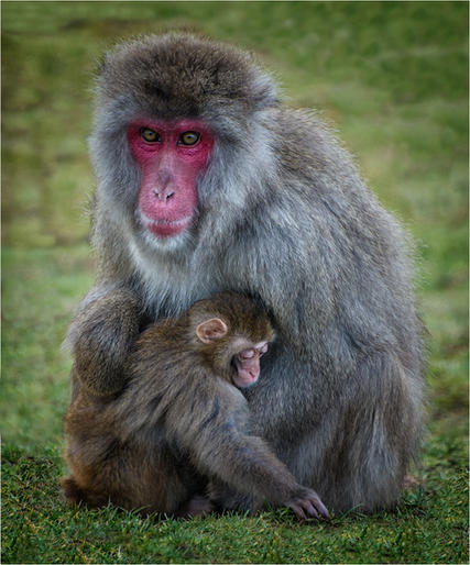 Russell McGowan_Snow Monkey and Baby