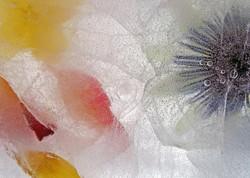 4 Frozen Flowers_Pam Sherren