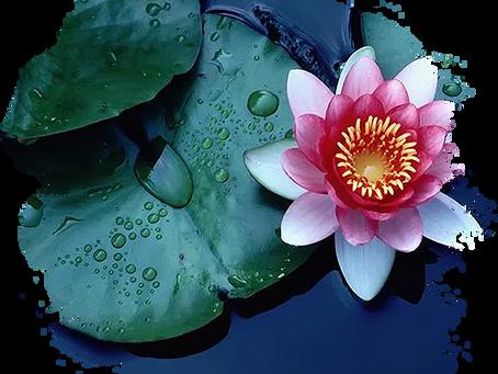 """""""Chi Kung 7 Lotus """""""
