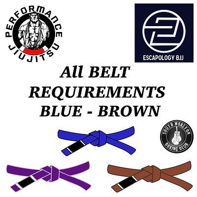 BJJ Belts.jpg