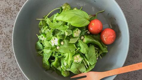 収穫野菜のサラダ