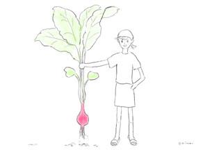 25日で二十日大根を収穫