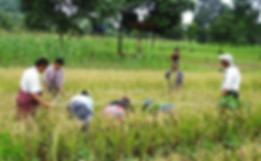 Harvest3.png