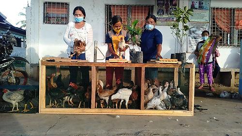 Distribution of Ducks and chicken at Kamarahan, Pres. Roxas. Photo taken Jonna Mae L. Duca