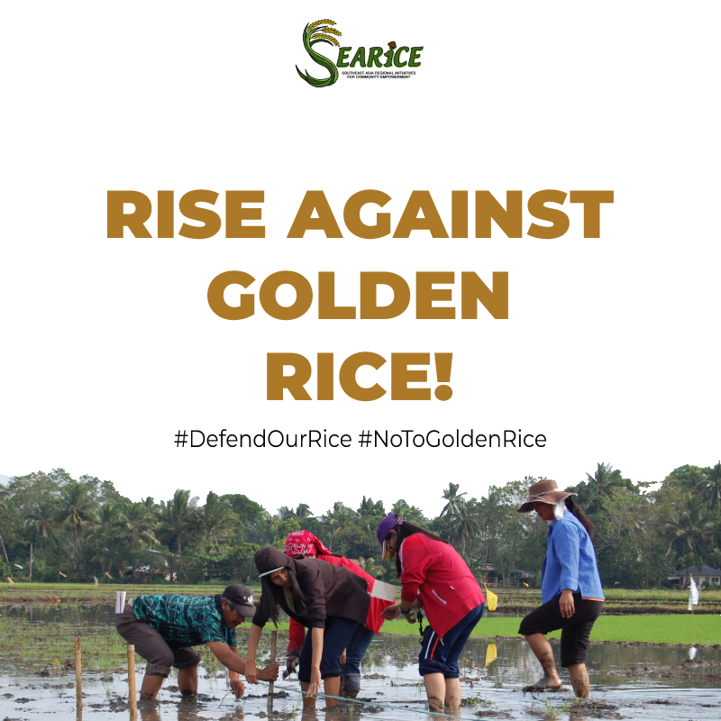 GoldenRice1 (2)[2773].png