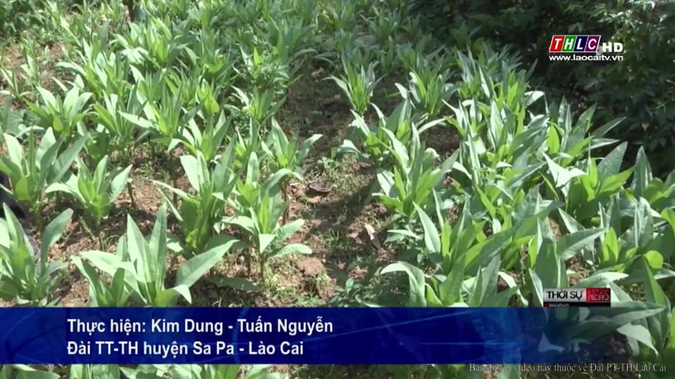 TV Feature (Lao Cai).mp4