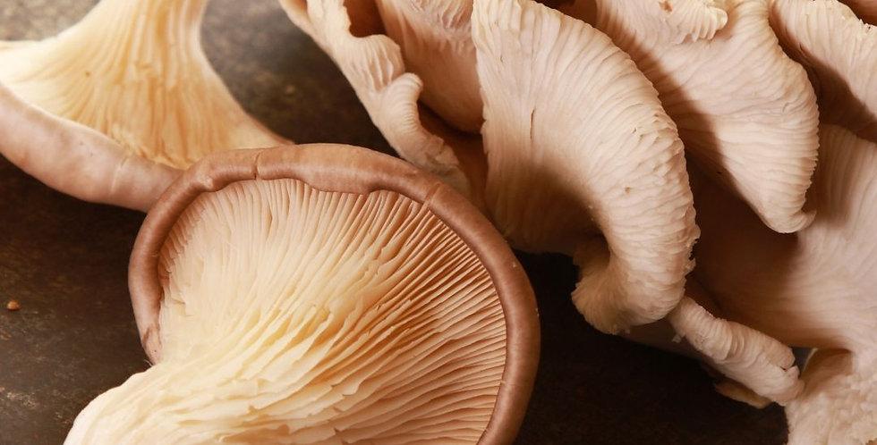 Fri, Jan 29: Mighty Mushroom (In-Store Class)