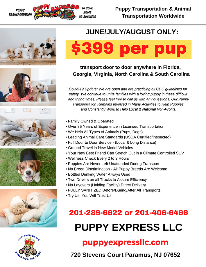 Puppy Express Florida Special Offer.png