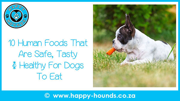 10 Human Foods That Are Safe, Tasty   Home   Happy Hounds