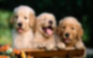 Fuever Home Dog Rescue - Adopt / Foster /Rescue / Volunteer