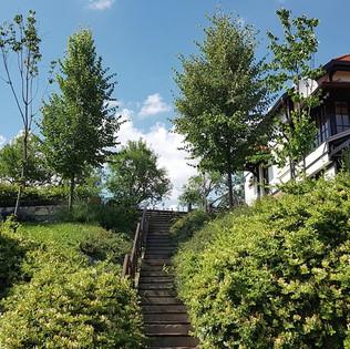 zeleni pogled na kuću