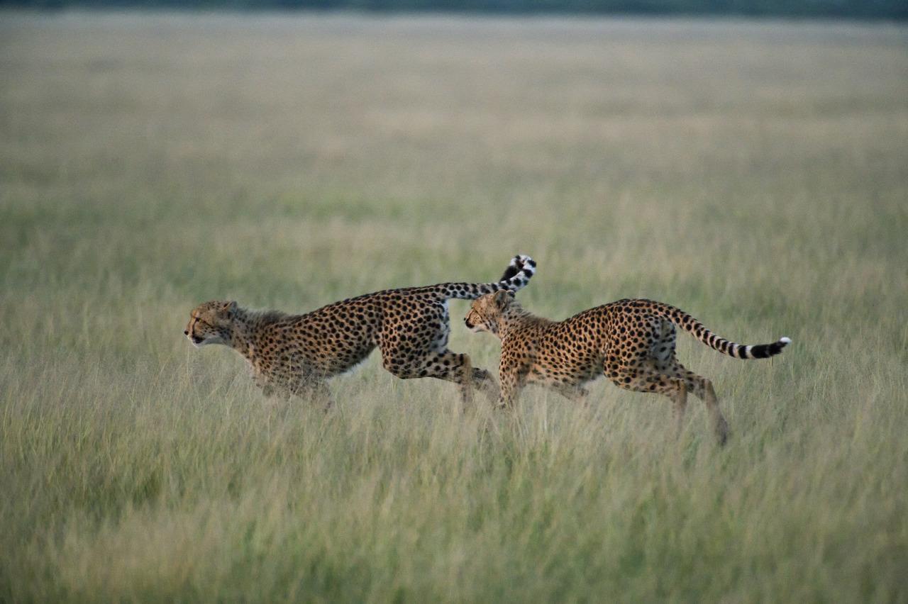 KalahariPlains_WS_BSC_49