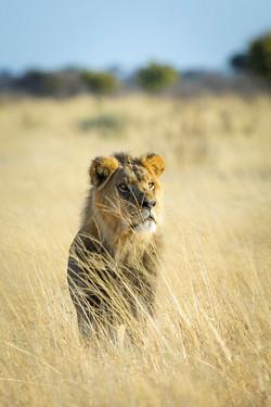 KalahariPlains_WS_BSC_22