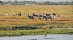 Ngoma_Safari_Lodge_SD_BSC_07