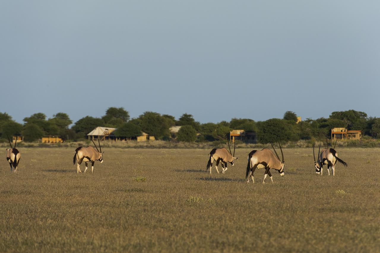 KalahariPlains_WS_BSC_53