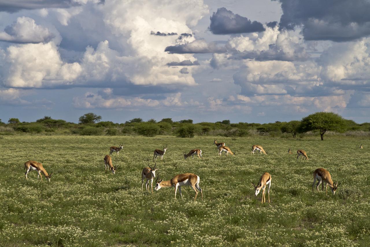 KalahariPlains_WS_BSC_08