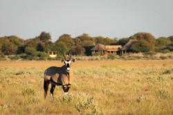 KalahariPlains_WS_BSC_30