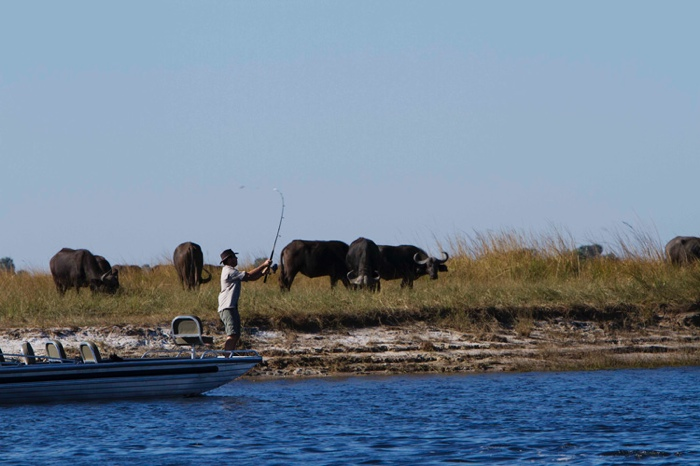 Chobe_Savanna_0021