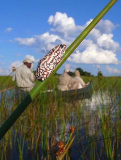Camp_Okavango_DD_BSC_08