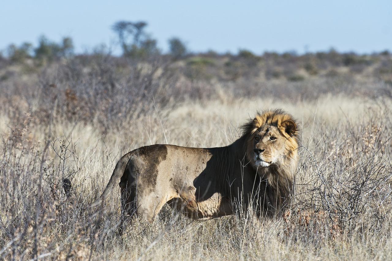 KalahariPlains_WS_BSC_56
