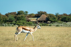 KalahariPlains_WS_BSC_29