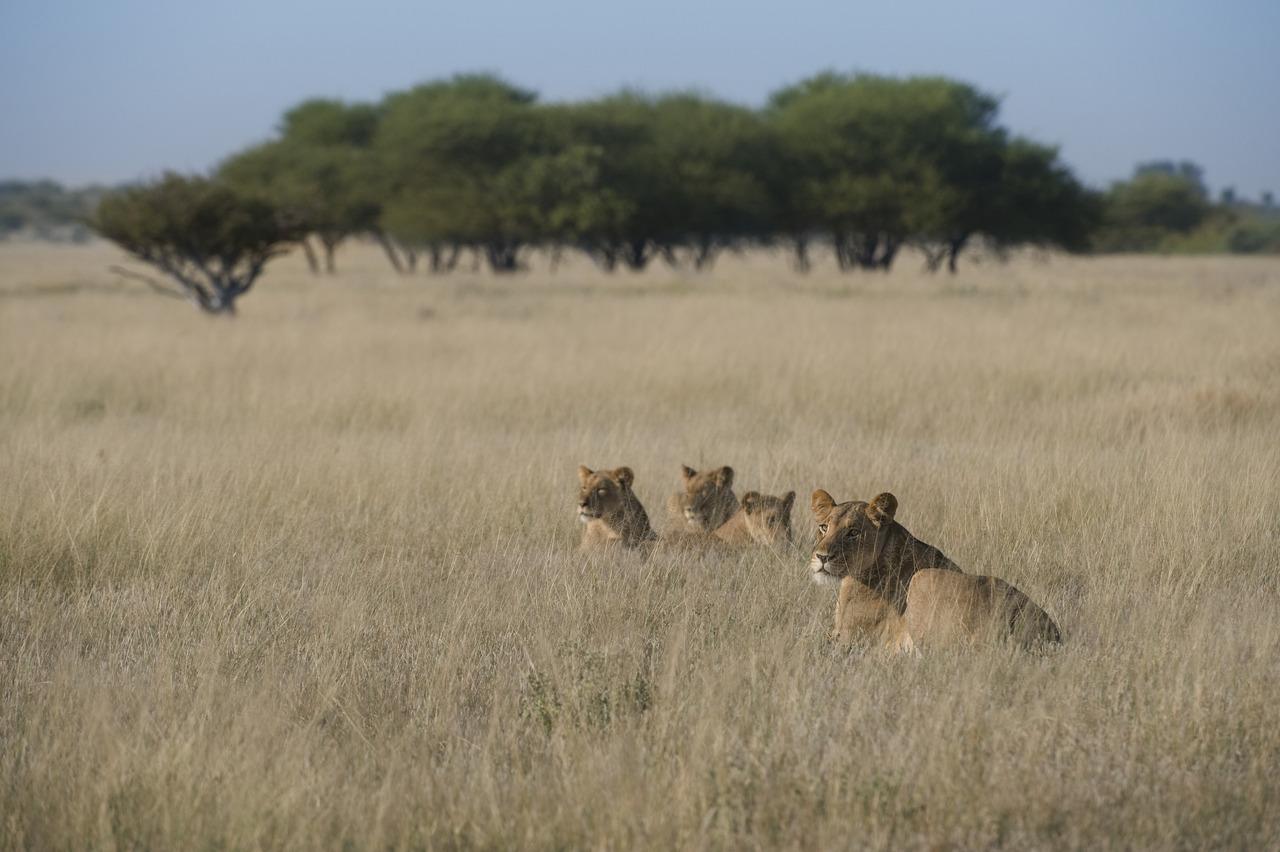 KalahariPlains_WS_BSC_46