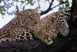 Ngoma_Safari_Lodge_SD_BSC_23