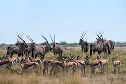 KalahariPlains_WS_BSC_47