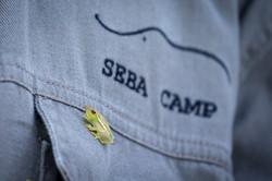 Seba_WS_BSC_20