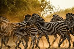 Muchenje_Safari_Lodge_SD_BSC_25
