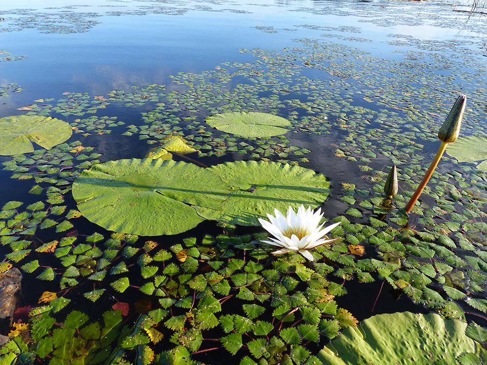 Botswana_safari_lagoon