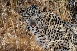 KalahariPlains_WS_BSC_21