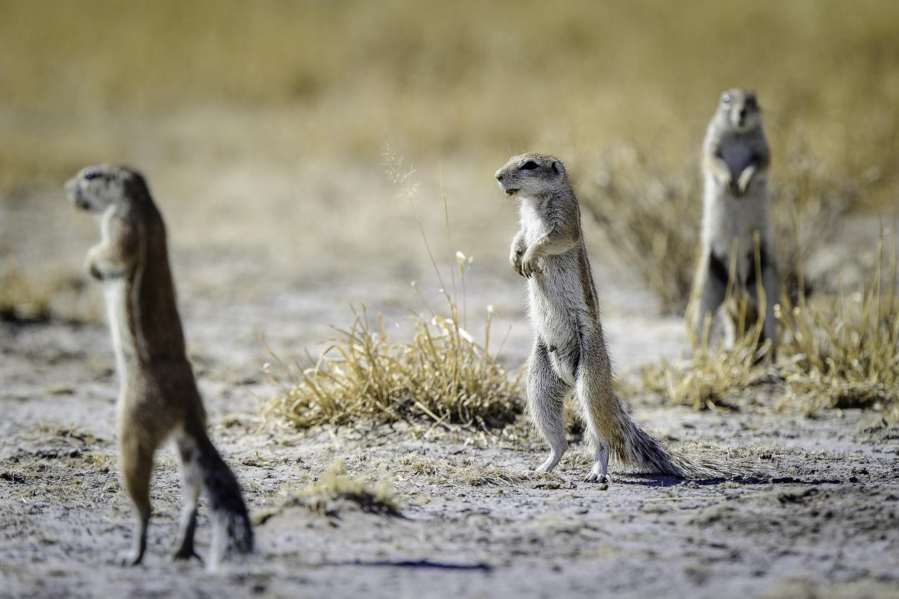KalahariPlains_WS_BSC_15