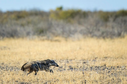 KalahariPlains_WS_BSC_17