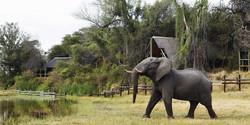 Savute_Safari_Lodge_DD_BSC_21