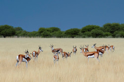 KalahariPlains_WS_BSC_43
